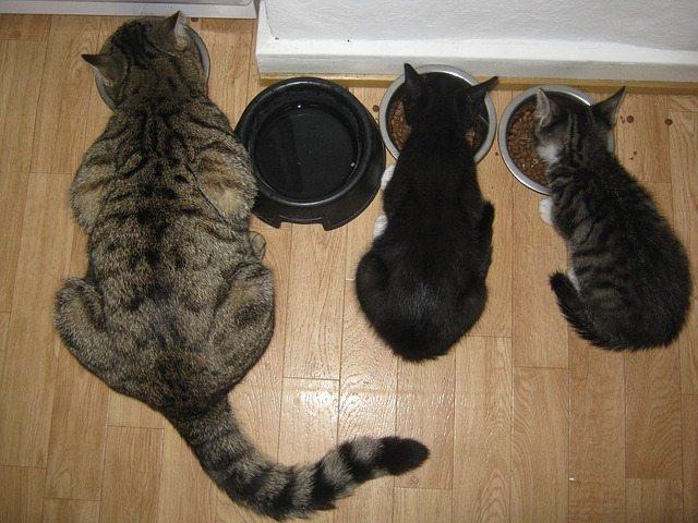 Lifehacks voor katten eigenaren
